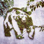 PROJET GRAFF VÉGÉTAL : verdissons les murs de la MJC ! 22 mai